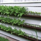 Gutter-gardens-image-by-Sarah-G