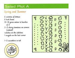 Shows a plan for the first Spring/Summer Salad plot, including a list of plants: 6 varieties of lettuce, bush beans, onions, cheery tomatoes on the corners, radishes on the sidelines, 1 arugula and 1-2 cucumbers in a tub.