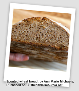 a loaf of Sprouted Whole Wheat Sourdough Bread, cut, seen from the cut end. Looks delicious!