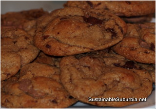 A plate of Chocolate Chip cookies looking delicious.
