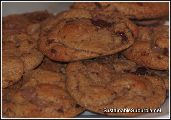 a plate of chocolate chunk cookies looking delectable