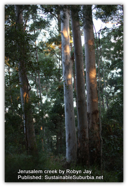 An Australian Forest - Jerusalem creek walk by Robyn Jay.