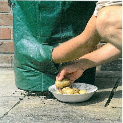 Someone reaches into the bottom of a potato grow bag through a flap, to pull out ready grown potatoes
